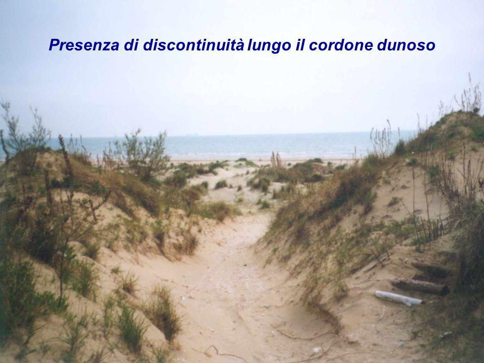 Presenza di discontinuità lungo il cordone dunoso