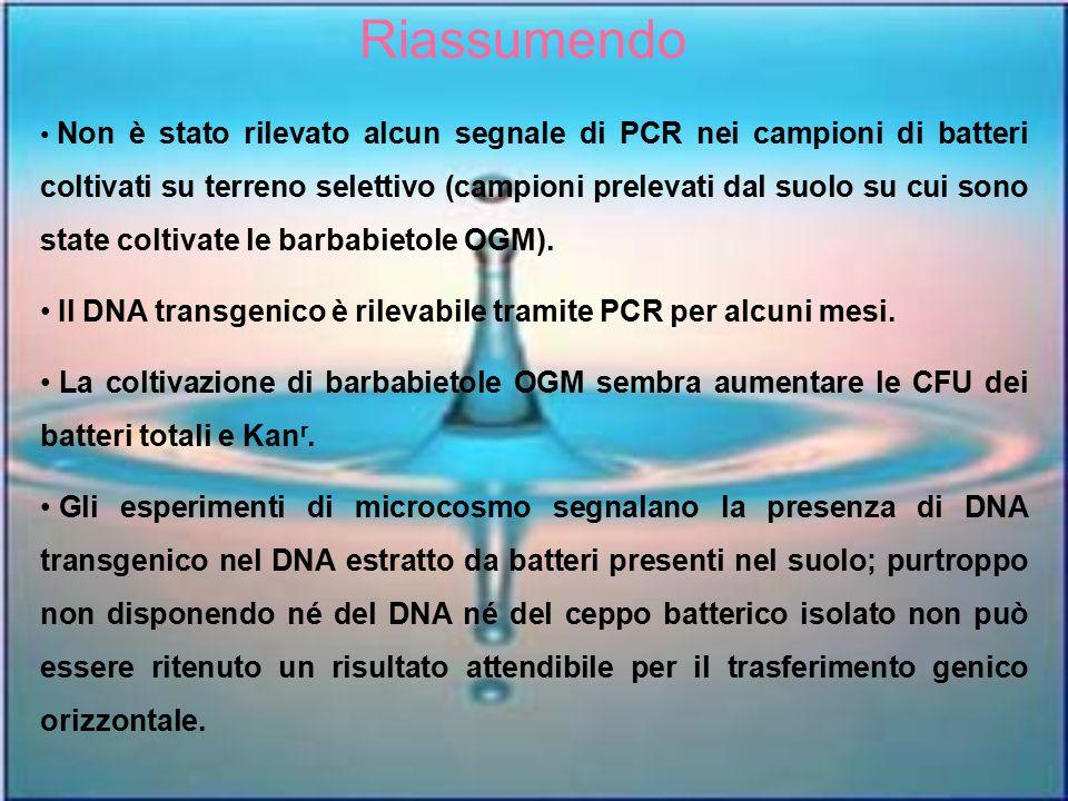 Riassumendo Non è stato rilevato alcun segnale di PCR nei campioni di batteri coltivati su terreno selettivo (campioni prelevati dal suolo su cui sono
