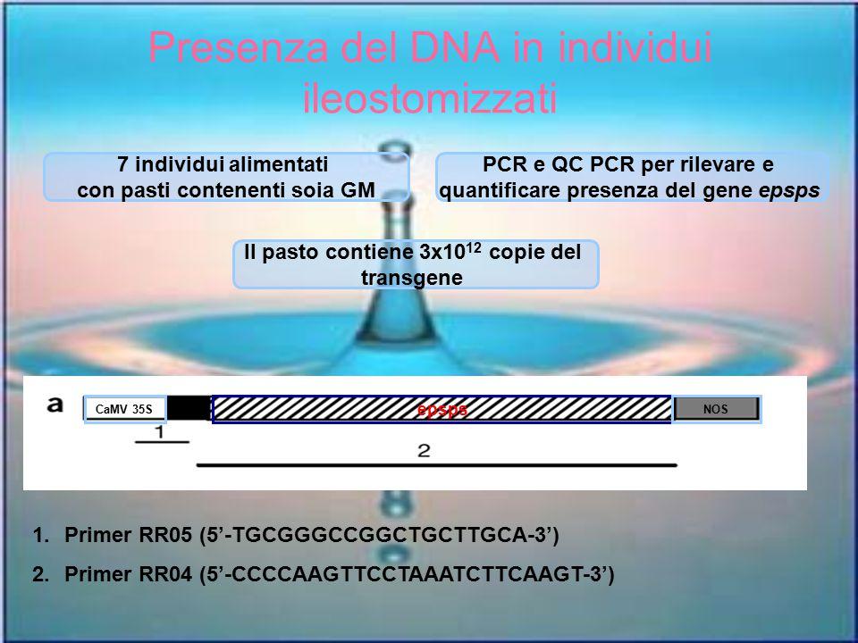 Presenza del DNA in individui ileostomizzati 7 individui alimentati con pasti contenenti soia GM PCR e QC PCR per rilevare e quantificare presenza del