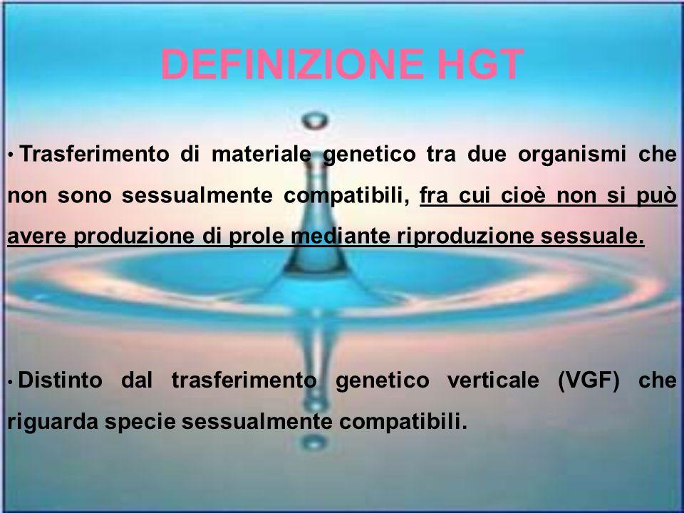 Riassumendo Non è stato rilevato alcun segnale di PCR nei campioni di batteri coltivati su terreno selettivo (campioni prelevati dal suolo su cui sono state coltivate le barbabietole OGM).