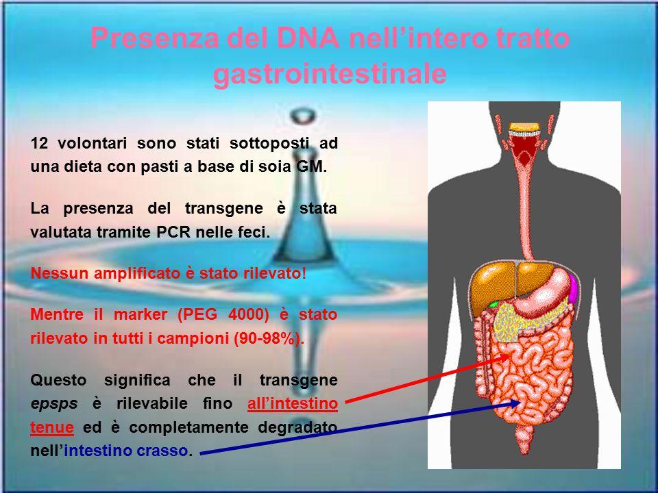 Presenza del DNA nell'intero tratto gastrointestinale 12 volontari sono stati sottoposti ad una dieta con pasti a base di soia GM. La presenza del tra