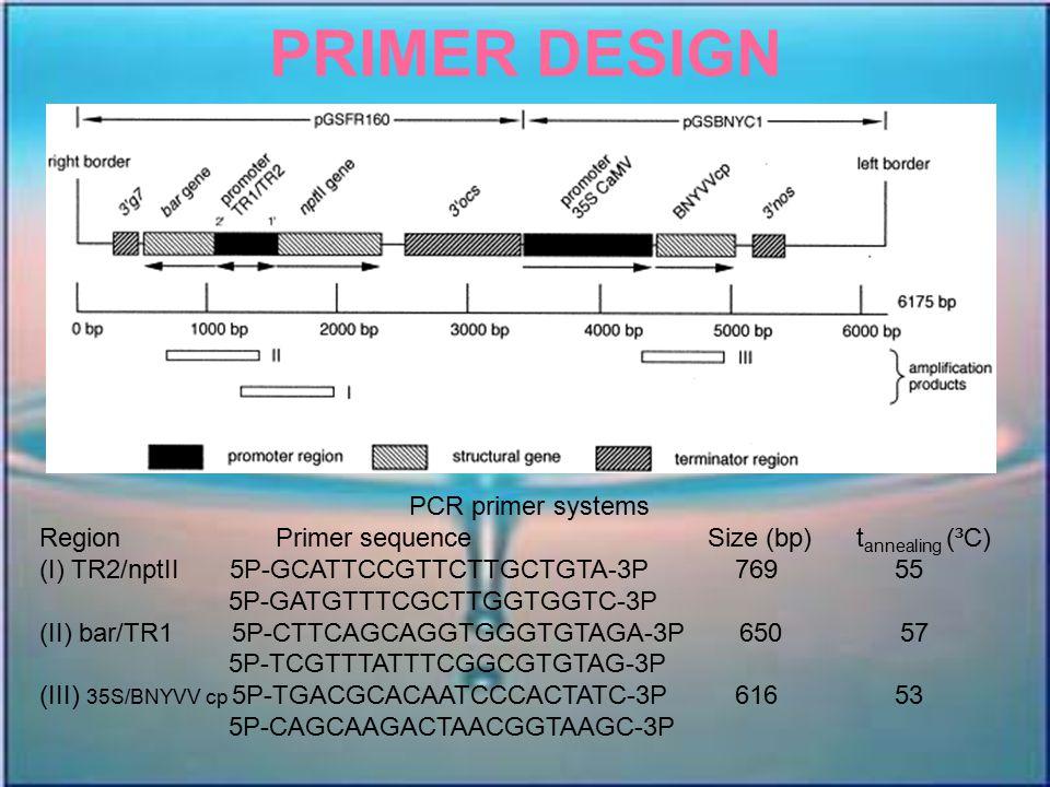 PRIMER DESIGN PCR primer systems Region Primer sequence Size (bp) t annealing (³C) (I) TR2/nptII 5P-GCATTCCGTTCTTGCTGTA-3P 769 55 5P-GATGTTTCGCTTGGTGG