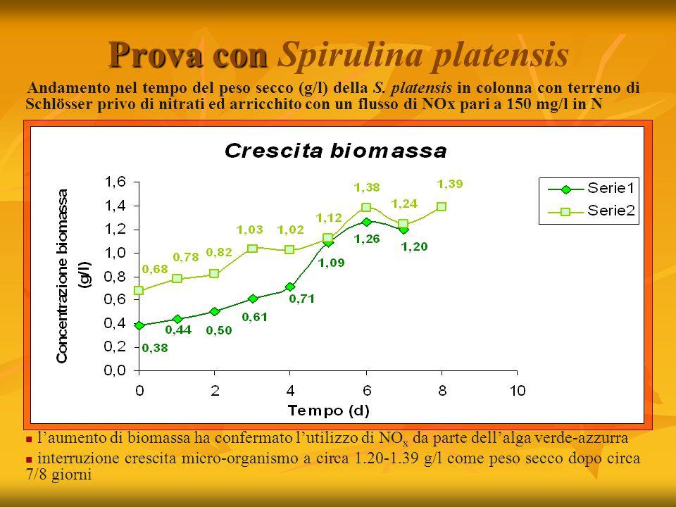 Prova con Prova con Spirulina platensis Andamento nel tempo del peso secco (g/l) della S.