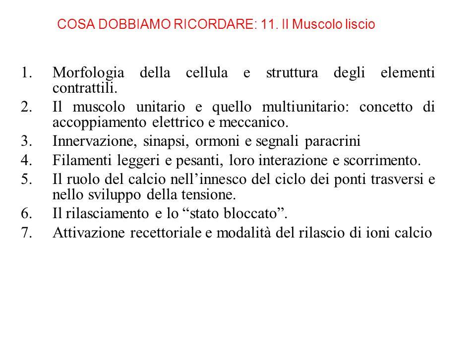 COSA DOBBIAMO RICORDARE: 11. Il Muscolo liscio 1.Morfologia della cellula e struttura degli elementi contrattili. 2.Il muscolo unitario e quello multi