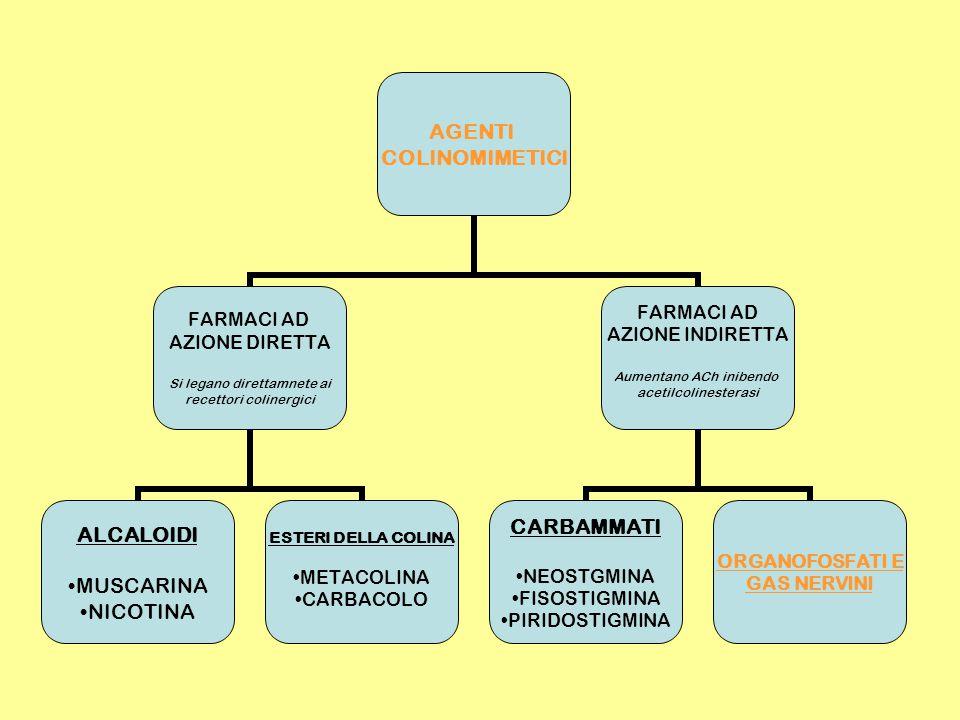 AGENTI COLINOMIMETICI FARMACI AD AZIONE DIRETTA Si legano direttamnete ai recettori colinergici ALCALOIDI MUSCARINA NICOTINA ESTERI DELLA COLINA METACOLINA CARBACOLO FARMACI AD AZIONE INDIRETTA Aumentano ACh inibendo acetilcolinesterasi CARBAMMATI NEOSTGMINA FISOSTIGMINA PIRIDOSTIGMINA ORGANOFOSFATI E GAS NERVINI