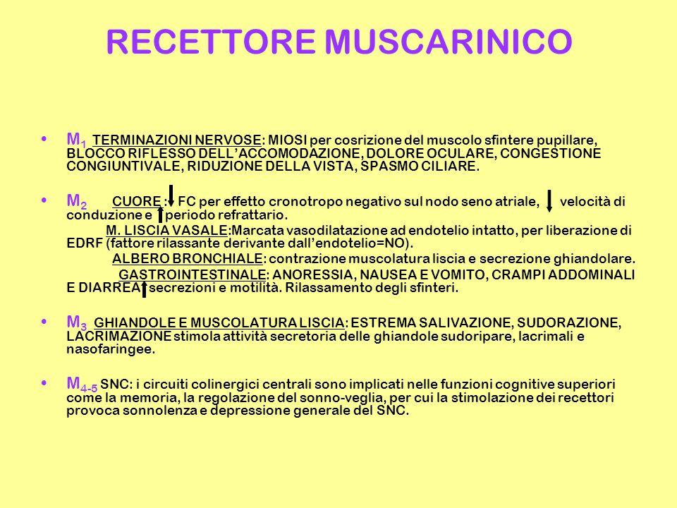 RECETTORE MUSCARINICO M 1 TERMINAZIONI NERVOSE: MIOSI per cosrizione del muscolo sfintere pupillare, BLOCCO RIFLESSO DELL'ACCOMODAZIONE, DOLORE OCULARE, CONGESTIONE CONGIUNTIVALE, RIDUZIONE DELLA VISTA, SPASMO CILIARE.
