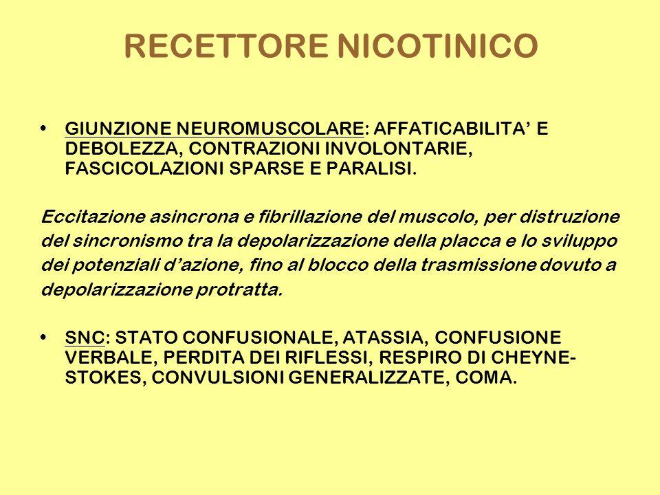 RECETTORE NICOTINICO GIUNZIONE NEUROMUSCOLARE: AFFATICABILITA' E DEBOLEZZA, CONTRAZIONI INVOLONTARIE, FASCICOLAZIONI SPARSE E PARALISI. Eccitazione as