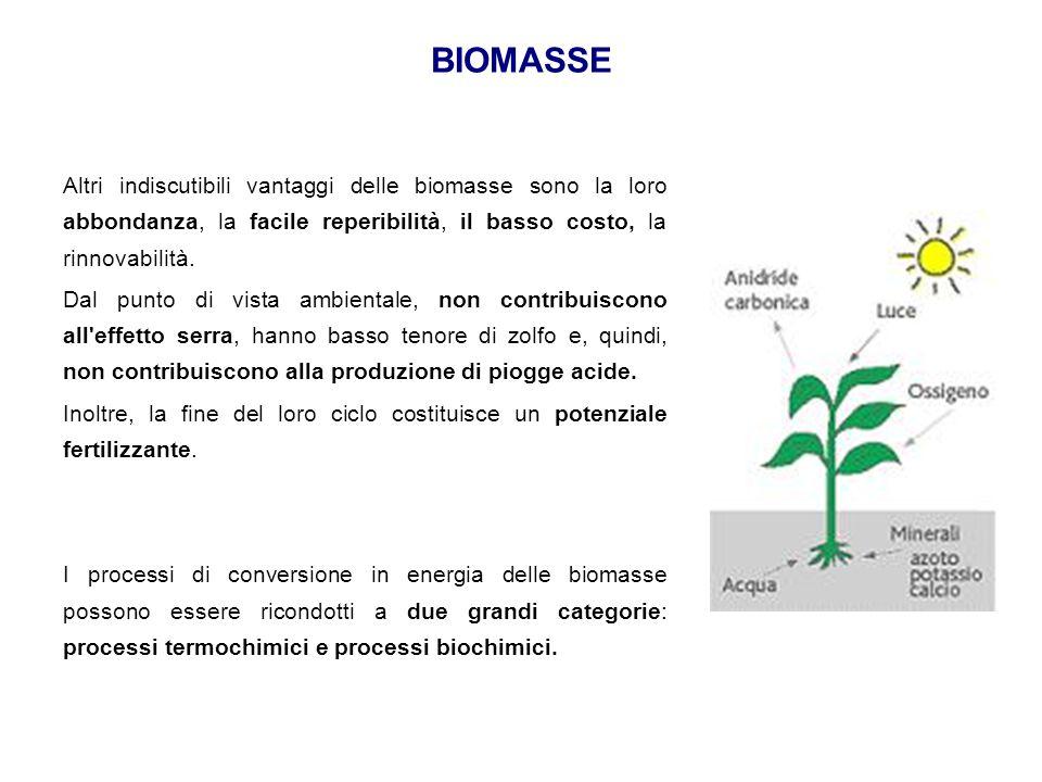BIOMASSE Altri indiscutibili vantaggi delle biomasse sono la loro abbondanza, la facile reperibilità, il basso costo, la rinnovabilità. Dal punto di v