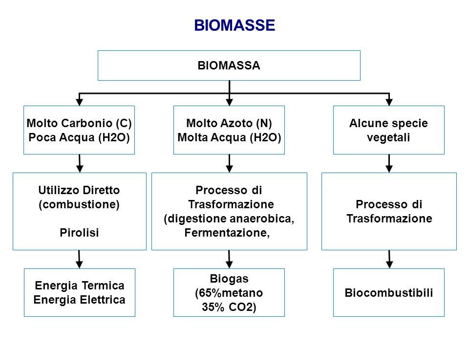 BIOMASSE BIOMASSA Molto Carbonio (C) Poca Acqua (H2O) Alcune specie vegetali Molto Azoto (N) Molta Acqua (H2O) Utilizzo Diretto (combustione) Pirolisi