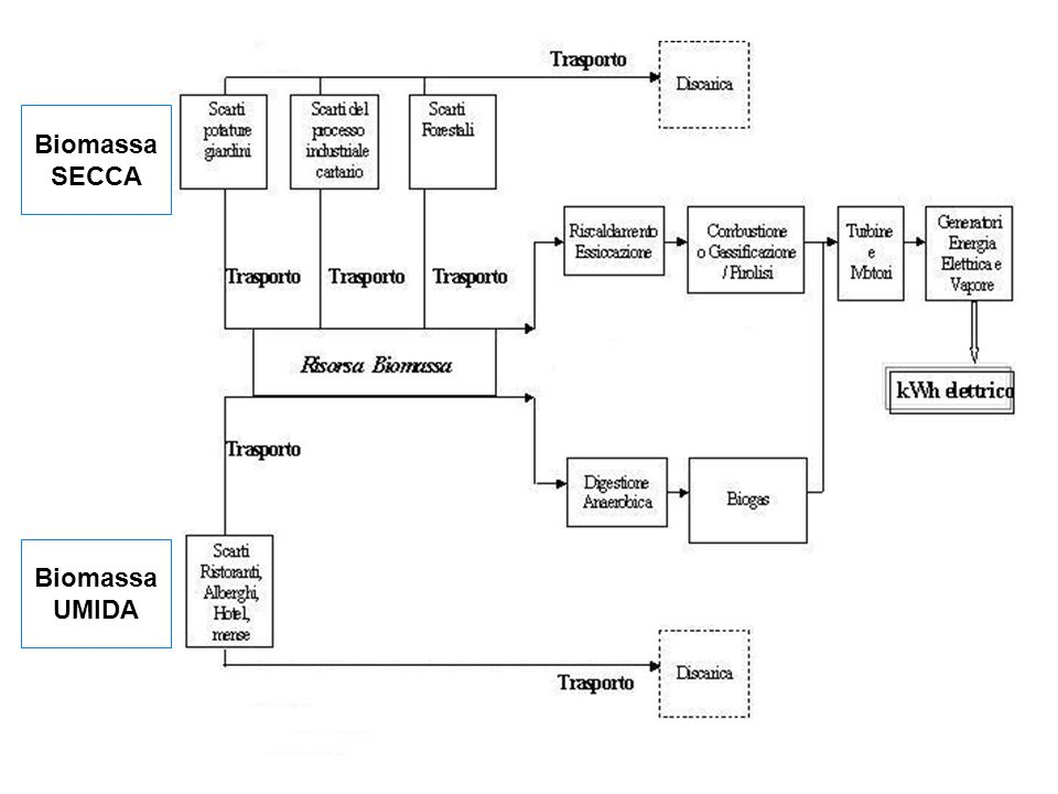 Biomassa SECCA Biomassa UMIDA