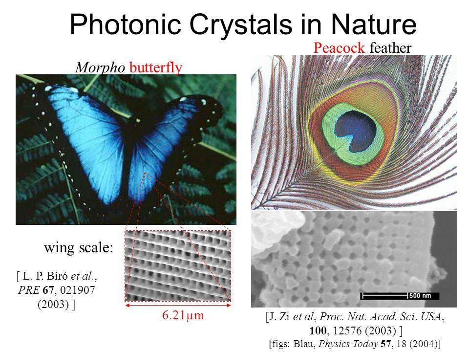 Photonic Crystals in Nature wing scale: Morpho butterfly 6.21µm [ L. P. Biró et al., PRE 67, 021907 (2003) ] Peacock feather [J. Zi et al, Proc. Nat.