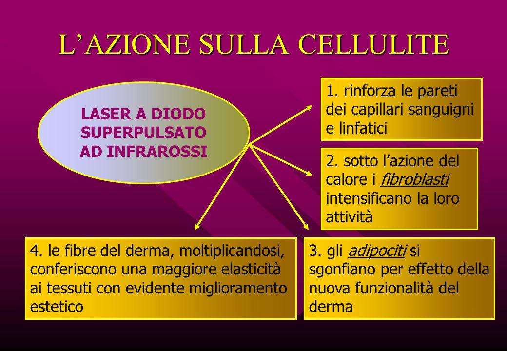 L'AZIONE SULLA CELLULITE 1. rinforza le pareti dei capillari sanguigni e linfatici 2. sotto l'azione del calore i fibroblasti intensificano la loro at
