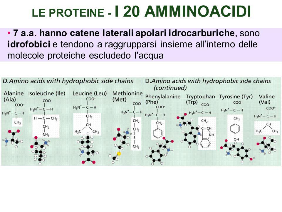LE PROTEINE - I 20 AMMINOACIDI 7 a.a.