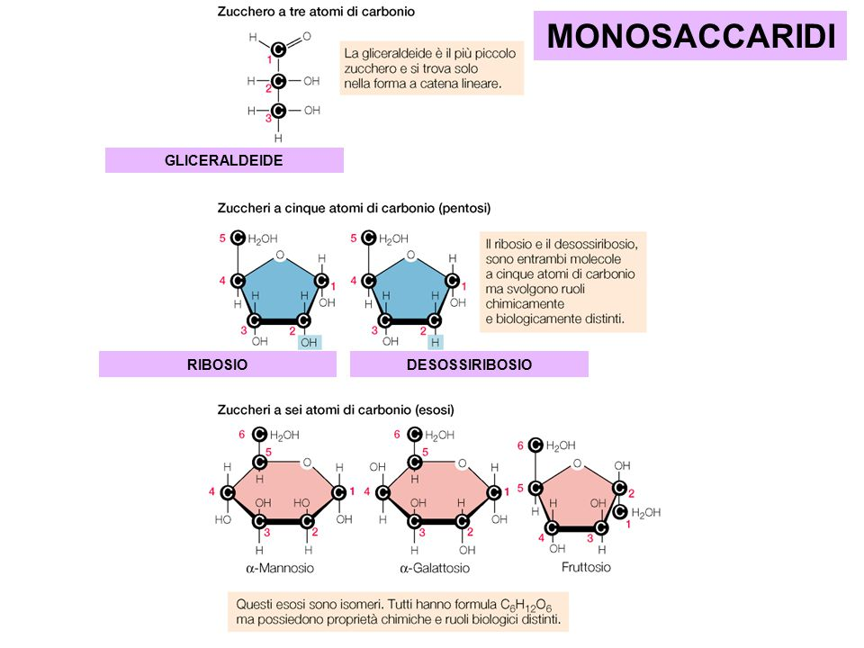 GLICERALDEIDE RIBOSIODESOSSIRIBOSIO MONOSACCARIDI