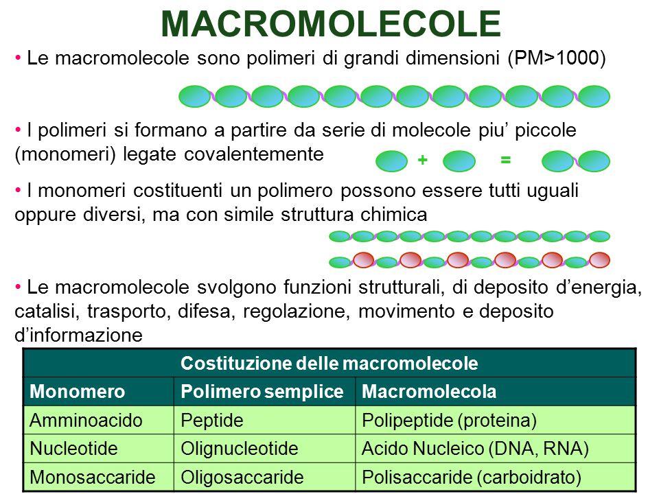 Le macromolecole sono polimeri di grandi dimensioni (PM>1000) I polimeri si formano a partire da serie di molecole piu' piccole (monomeri) legate covalentemente I monomeri costituenti un polimero possono essere tutti uguali oppure diversi, ma con simile struttura chimica Le macromolecole svolgono funzioni strutturali, di deposito d'energia, catalisi, trasporto, difesa, regolazione, movimento e deposito d'informazione Costituzione delle macromolecole MonomeroPolimero sempliceMacromolecola AmminoacidoPeptidePolipeptide (proteina) NucleotideOlignucleotideAcido Nucleico (DNA, RNA) MonosaccarideOligosaccaridePolisaccaride (carboidrato) +=