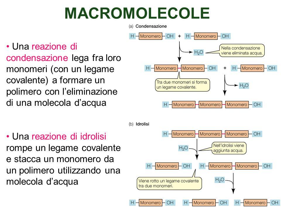 MACROMOLECOLE Una reazione di condensazione lega fra loro monomeri (con un legame covalente) a formare un polimero con l'eliminazione di una molecola d'acqua Una reazione di idrolisi rompe un legame covalente e stacca un monomero da un polimero utilizzando una molecola d'acqua