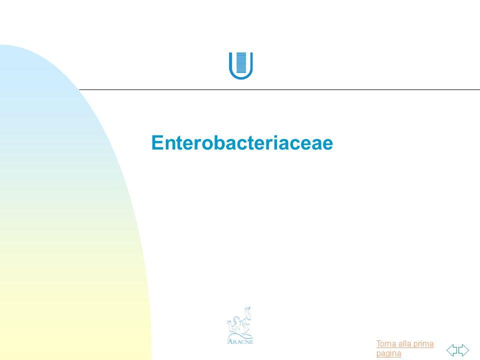 Torna alla prima pagina ENTEROBACTERIACAE 30 generi 120 specie 8 gruppi enterici in base a: Omologia genetica del DNA Proprietà biochimiche Proprietà sierologiche Batteriofagi specifici Sensibilità agli antibiotici Resistenza ai sali biliari Presenza di capsula