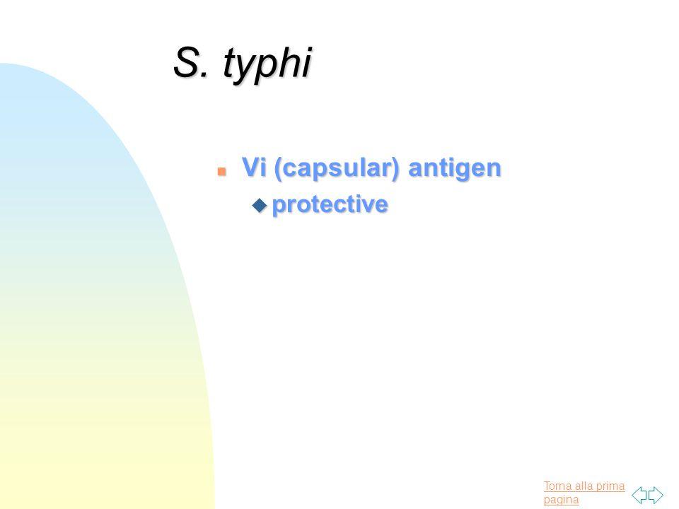 Torna alla prima pagina S. typhi n Vi (capsular) antigen u protective