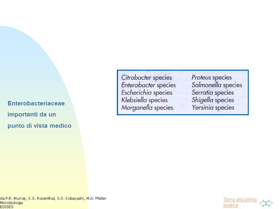 Torna alla prima pagina Enterobacteriaceae importanti da un punto di vista medico