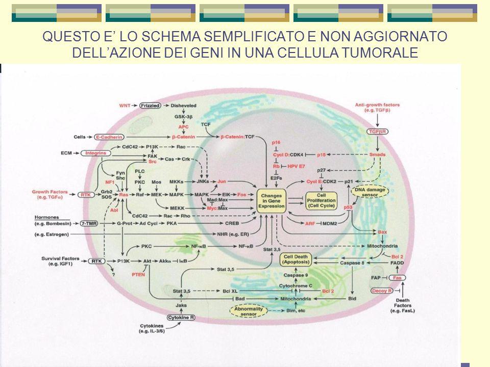 QUESTO E' LO SCHEMA SEMPLIFICATO E NON AGGIORNATO DELL'AZIONE DEI GENI IN UNA CELLULA TUMORALE