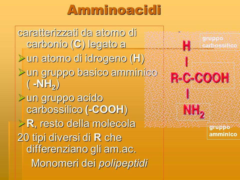 Amminoacidi caratterizzati da atomo di carbonio (C) legato a  un atomo di idrogeno (H)  un gruppo basico amminico ( -NH 2 )  un gruppo acido carbos