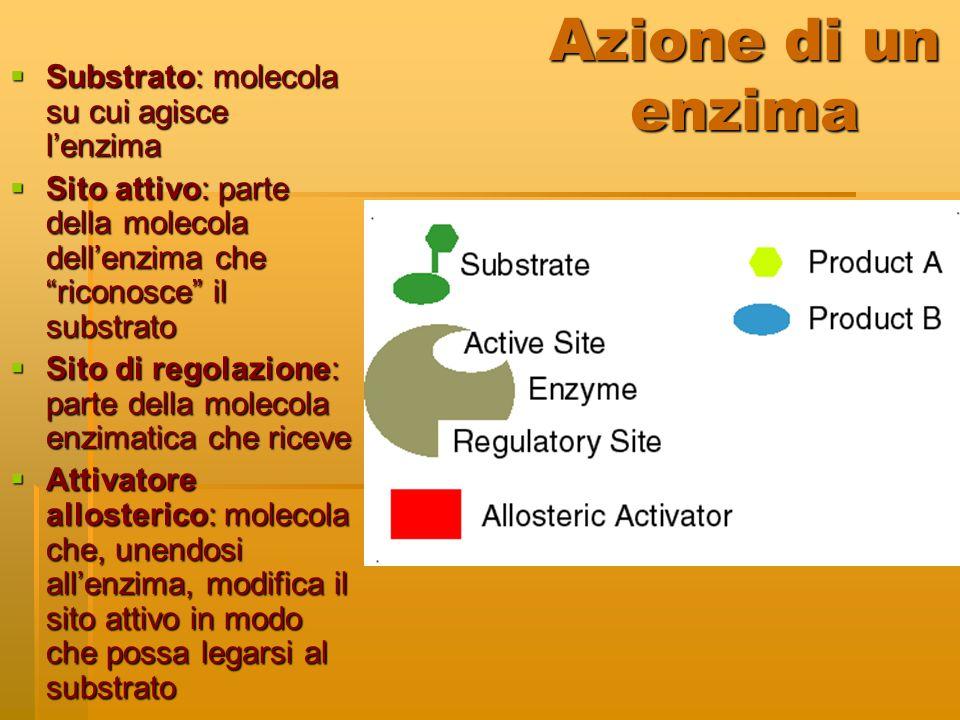"""Azione di un enzima  Substrato: molecola su cui agisce l'enzima  Sito attivo: parte della molecola dell'enzima che """"riconosce"""" il substrato  Sito d"""