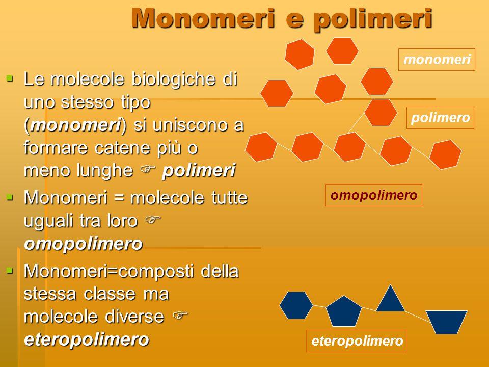 Monomeri e polimeri  Le molecole biologiche di uno stesso tipo (monomeri) si uniscono a formare catene più o meno lunghe  polimeri  Monomeri = mole