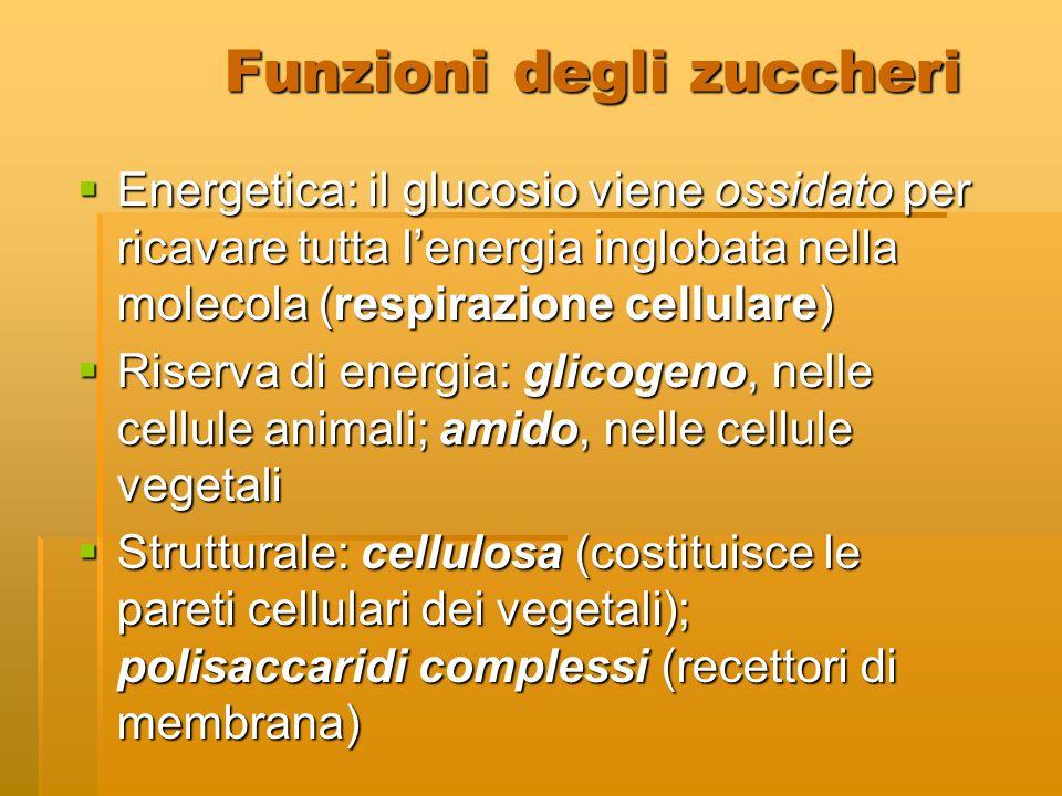 Funzioni degli zuccheri  Energetica: il glucosio viene ossidato per ricavare tutta l'energia inglobata nella molecola (respirazione cellulare)  Rise