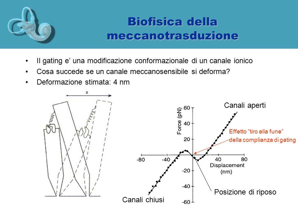 Biofisica della meccanotrasduzione Il gating e' una modificazione conformazionale di un canale ionico Cosa succede se un canale meccanosensibile si de