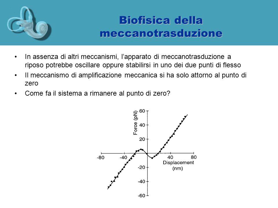 Biofisica della meccanotrasduzione In assenza di altri meccanismi, l'apparato di meccanotrasduzione a riposo potrebbe oscillare oppure stabilirsi in u