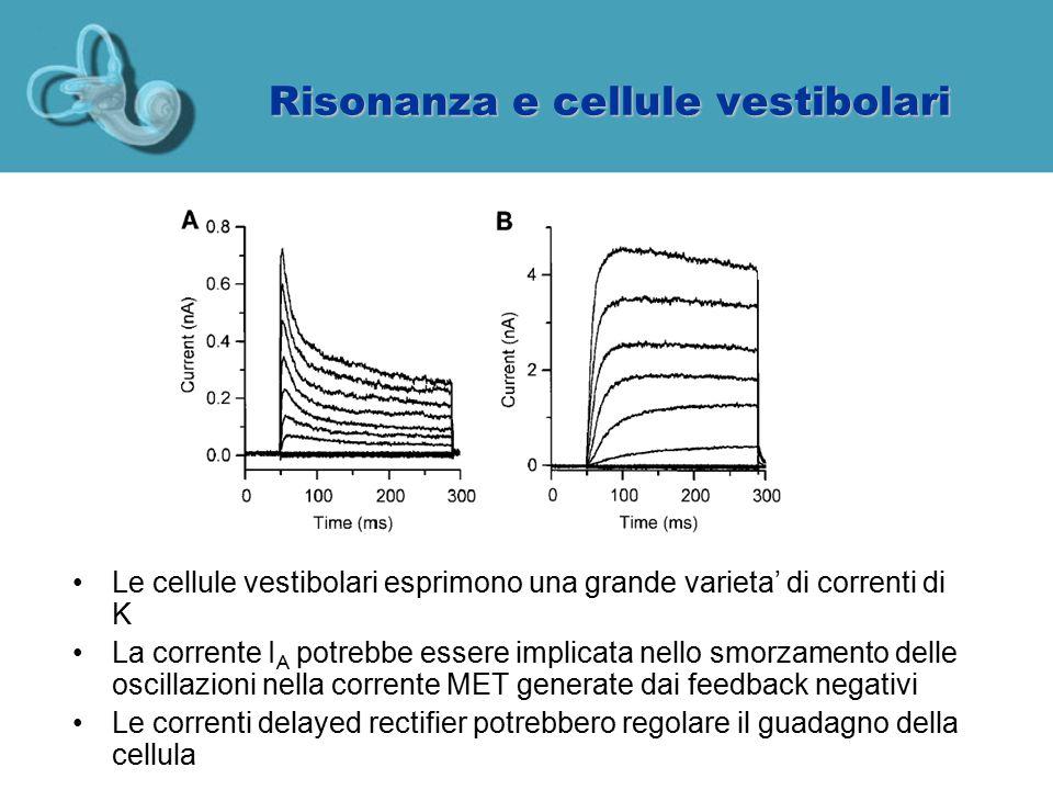 Risonanza e cellule vestibolari Le cellule vestibolari esprimono una grande varieta' di correnti di K La corrente I A potrebbe essere implicata nello