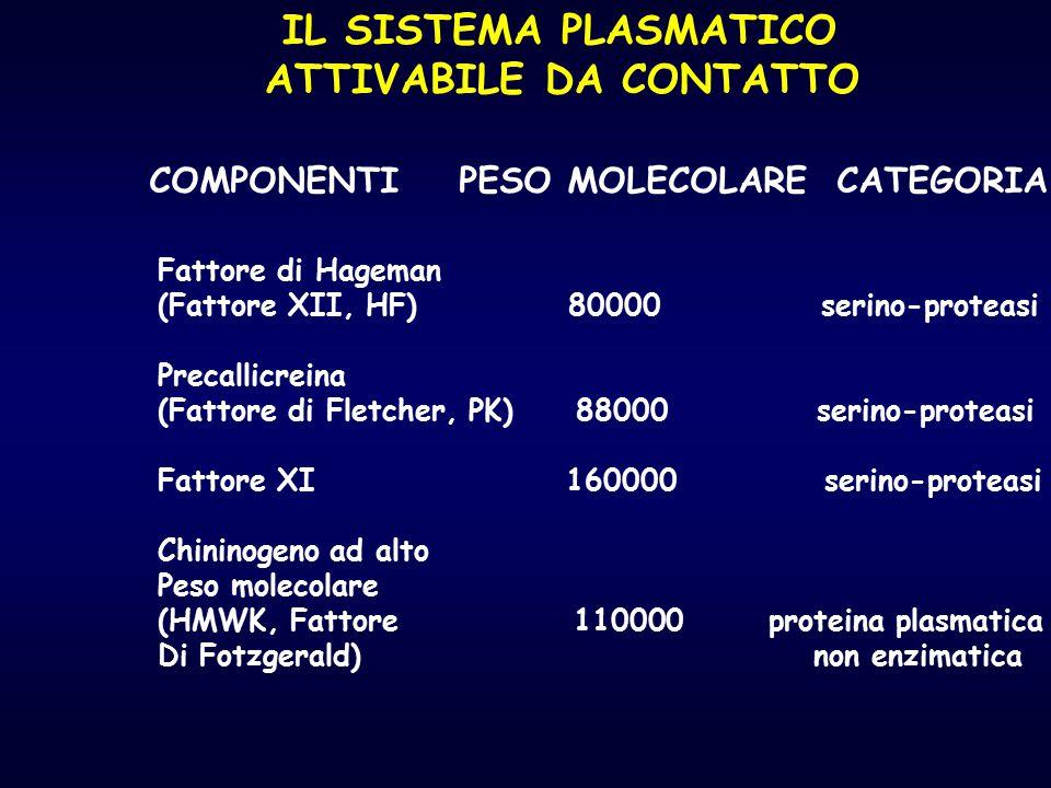 IL SISTEMA PLASMATICO ATTIVABILE DA CONTATTO COMPONENTI PESO MOLECOLARE CATEGORIA Fattore di Hageman (Fattore XII, HF) 80000 serino-proteasi Precallic