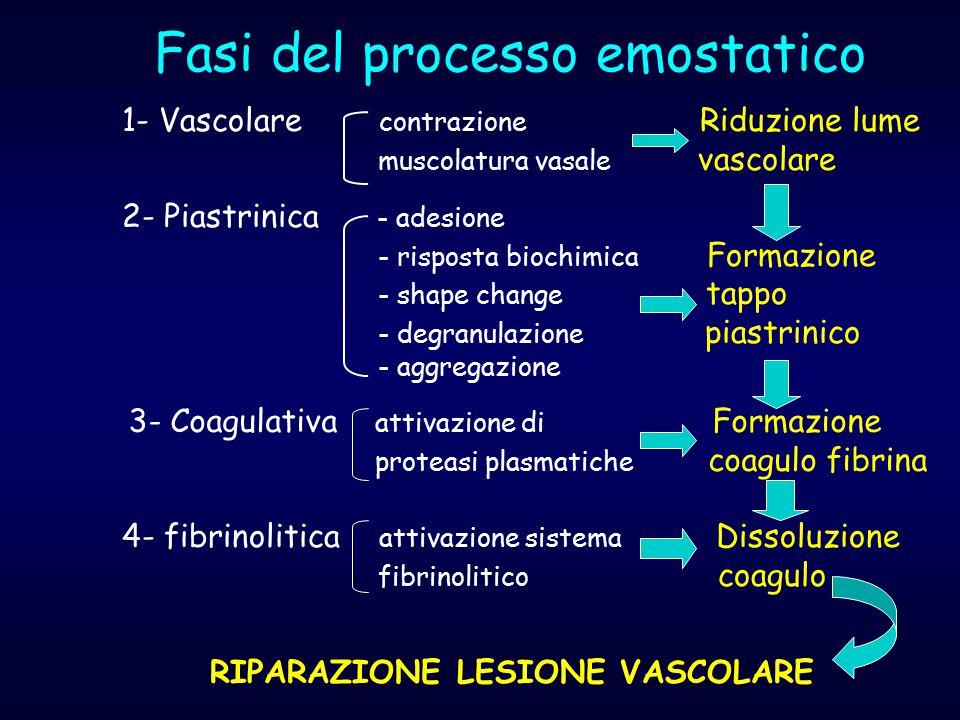 Fasi del processo emostatico 1- Vascolare contrazione Riduzione lume muscolatura vasale vascolare 2- Piastrinica - adesione - risposta biochimica Form