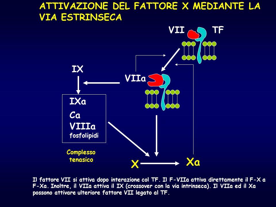 TFVII VIIa IX IXa Ca VIIIa fosfolipidi Complesso tenasico X Xa Il fattore VII si attiva dopo interazione col TF. Il F-VIIa attiva direttamente il F-X