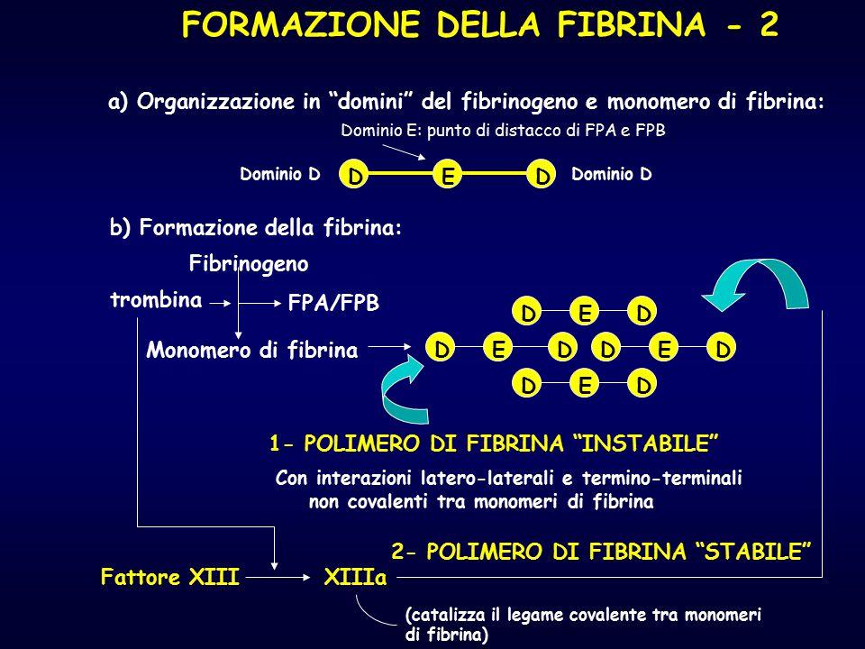 """FORMAZIONE DELLA FIBRINA - 2 a) Organizzazione in """"domini"""" del fibrinogeno e monomero di fibrina: Dominio D Dominio E: punto di distacco di FPA e FPB"""