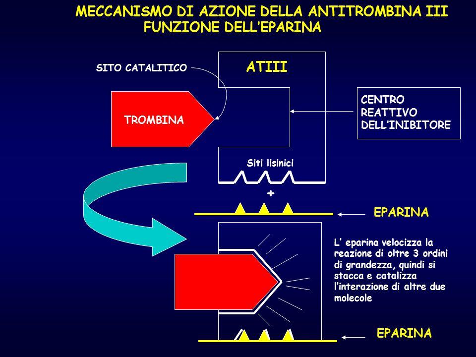 TROMBINA SITO CATALITICO ATIII CENTRO REATTIVO DELL'INIBITORE Siti lisinici EPARINA + L' eparina velocizza la reazione di oltre 3 ordini di grandezza,