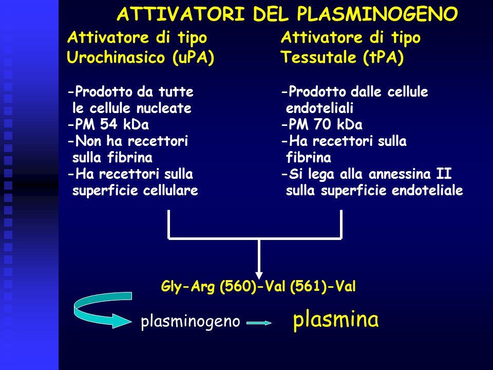 ATTIVATORI DEL PLASMINOGENO Gly-Arg (560)-Val (561)-Val plasminogeno plasmina Attivatore di tipo Urochinasico (uPA) -Prodotto da tutte le cellule nucl
