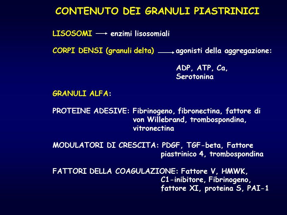 CONTENUTO DEI GRANULI PIASTRINICI LISOSOMI enzimi lisosomiali CORPI DENSI (granuli delta) agonisti della aggregazione: ADP, ATP, Ca, Serotonina GRANUL