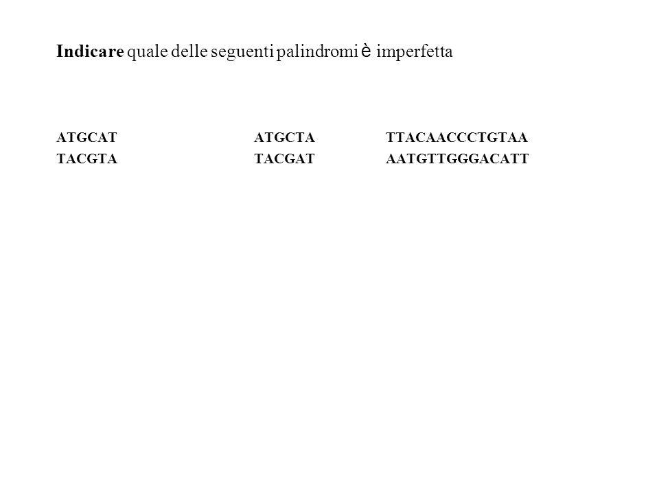 Indicare quale delle seguenti palindromi è imperfetta ATGCATATGCTATTACAACCCTGTAA TACGTATACGATAATGTTGGGACATT
