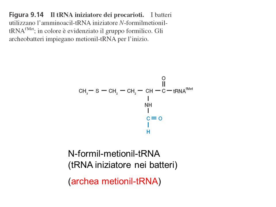 N-formil-metionil-tRNA (tRNA iniziatore nei batteri) (archea metionil-tRNA)