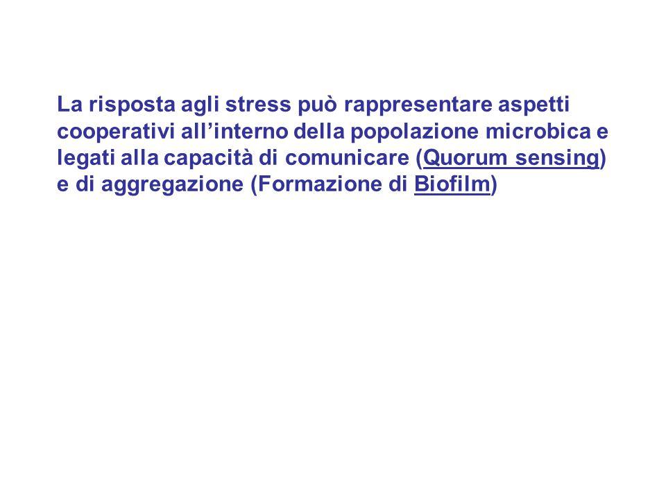 La risposta agli stress può rappresentare aspetti cooperativi all'interno della popolazione microbica e legati alla capacità di comunicare (Quorum sen