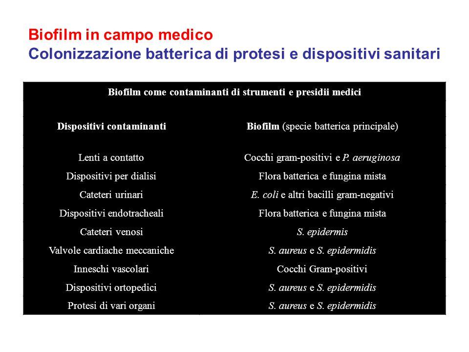 Biofilm in campo medico Colonizzazione batterica di protesi e dispositivi sanitari Biofilm come contaminanti di strumenti e presidii medici Dispositiv
