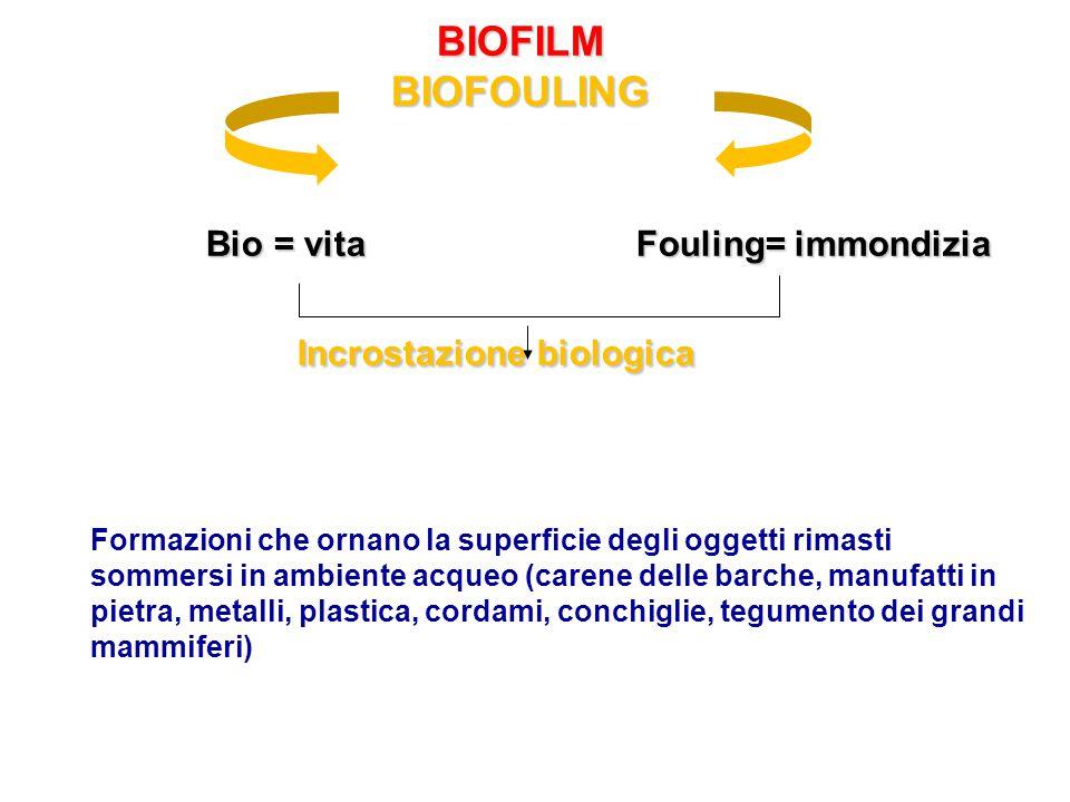 BIOFILM BIOFOULING Bio = vita Fouling= immondizia Incrostazione biologica BIOFILM BIOFOULING Bio = vita Fouling= immondizia Incrostazione biologica Fo