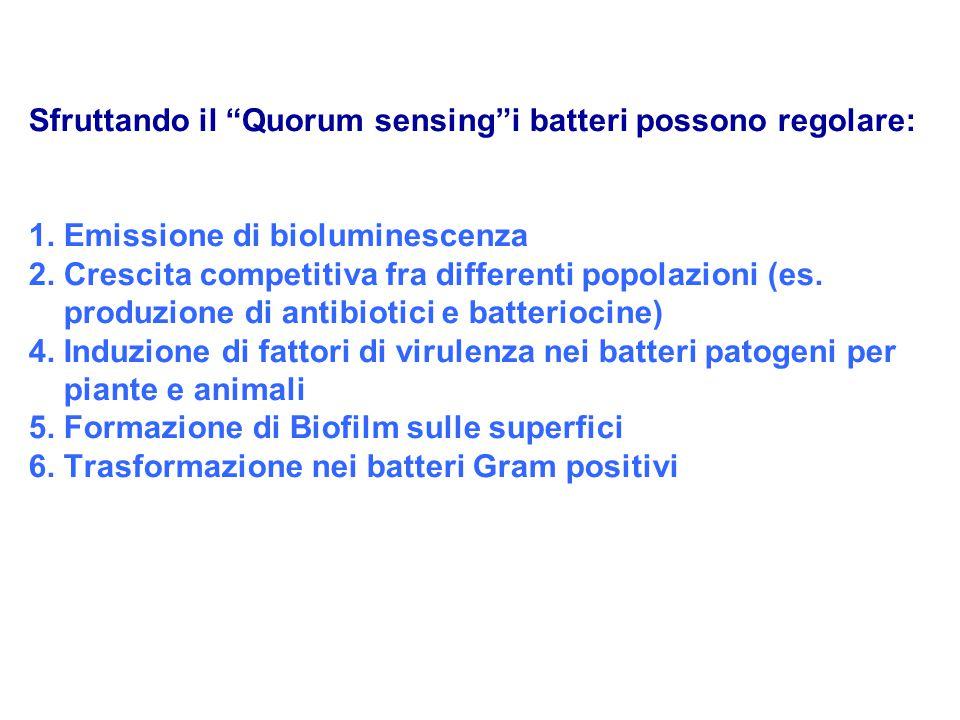 """Sfruttando il """"Quorum sensing""""i batteri possono regolare: 1. Emissione di bioluminescenza 2. Crescita competitiva fra differenti popolazioni (es. prod"""
