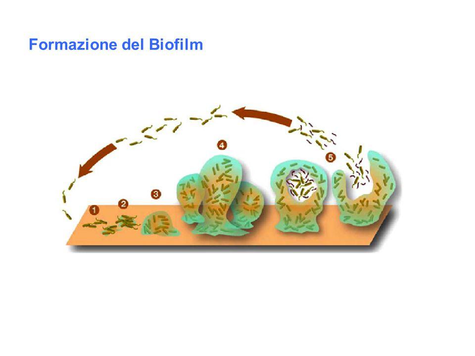 MONUMENTI Patina verdastra che spesso ricopre statue o parti di edifici d'epoca Microrganismi fotosintetici (cianobatteri) che possono impiantarsi su superfici inerti (rocce, marmi) Producono danno: -estetico -microstrutturaleepilitici (restano in superficie) endolitici (penetrano negli strati sottosuperficiali) Possono essere presenti: -organismi eterotrofi -licheni