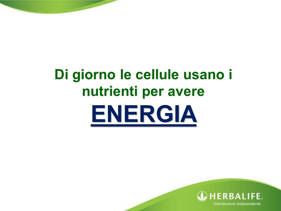 ENERGIA Di giorno le cellule usano i nutrienti per avere ENERGIA