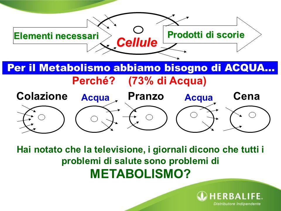Cellule Elementi necessari Per il Metabolismo abbiamo bisogno di ACQUA… Prodotti di scorie CenaPranzo Colazione Acqua Perché? (73% di Acqua) Hai notat