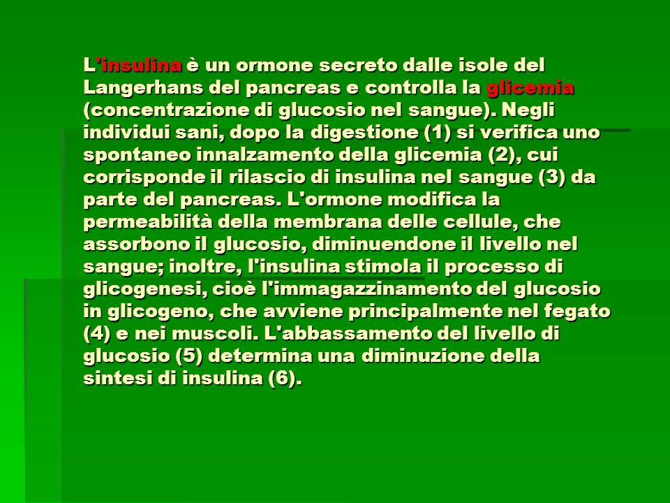 L insulina è un ormone secreto dalle isole del Langerhans del pancreas e controlla la glicemia (concentrazione di glucosio nel sangue).