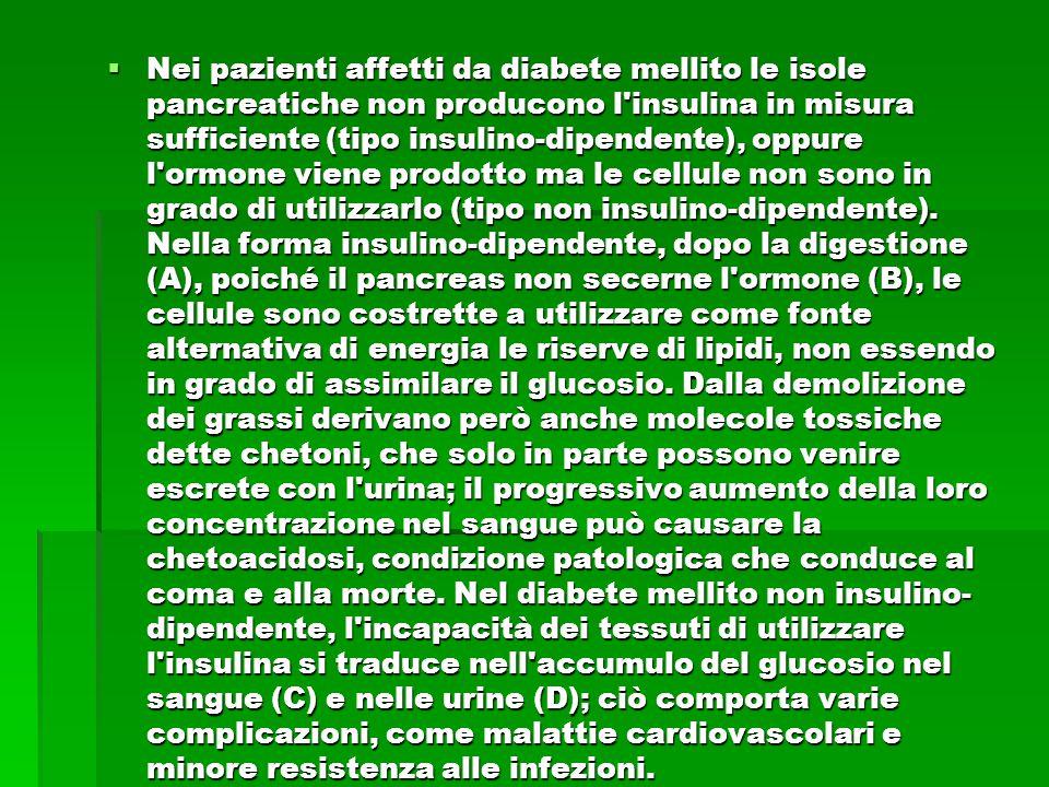 Nei pazienti affetti da diabete mellito le isole pancreatiche non producono l insulina in misura sufficiente (tipo insulino-dipendente), oppure l ormone viene prodotto ma le cellule non sono in grado di utilizzarlo (tipo non insulino-dipendente).