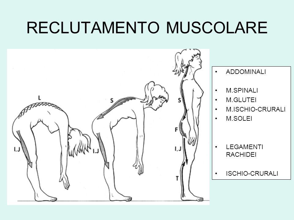RECLUTAMENTO MUSCOLARE ADDOMINALI M.SPINALI M.GLUTEI M.ISCHIO-CRURALI M.SOLEI LEGAMENTI RACHIDEI ISCHIO-CRURALI